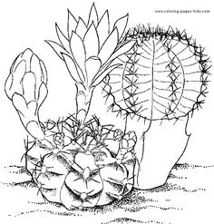 flower Page Printable Coloring Sheets | Coloring Pages Cactus 3 ...