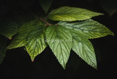 """""""Leaf"""" by GorgeousGreen 