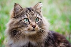 An Insane Poet's Meditation on His Cat