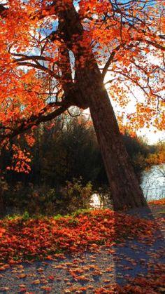 Autumn, Landscape, Shop, Park, River   Automne   Télécharger le fond d'écran 1080x1920. Téléphones Mobiles, Apple iPhone 6 Plus :: WallpapersFund.com