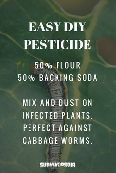 To Use Baking Soda For Gardening Garden pests. Organic gardening tips: using baking soda in the garden. Organic gardening tips: using baking soda in the garden. Organic Vegetables, Growing Vegetables, Organic Fruit, Vegetables Garden, Growing Plants, Organic Insecticide, Organic Pesticides, Diy Pest Control, Weed Control