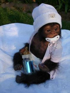 Cute Baby Monkeys | 30 Cute Baby Animals  But Seeing It From Not Cute | Interior Design ...