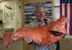 A 200-year-old #fish has been caught by a fisher... | on #AdlandPro