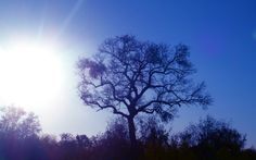 Blue skies and pretty trees. Kruger National Park, South Africa, 2011.