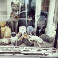 What a find for cat people.