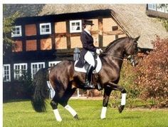 Markel Monday - Did You Know This About Insuring Your Stallion? | Dressage Daily
