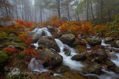 The Forest  by JuanPavon  The Forest autumn forest gredos piedralaves  JuanPavon