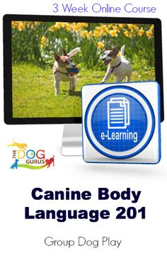 Understanding canine play behaviors is critical to providing safe off-leash play services.  You will learn dog play styles, leadership skills, dog management techniques and when to intervene to keep play safe and fun. $147 http://www.safeoffleashdogplay.com/courses/