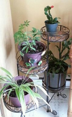 My houseplants