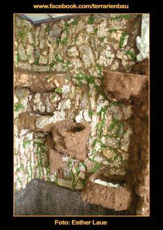 Bild 10 - Bau und Einrichtung Regenwaldterrarium mit Wasserfall - Fertige Rückwand mit Pflanztöpfen