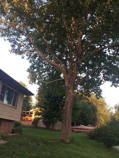 Tree Service Omaha, Nebraska www.treeservicesomaha.com