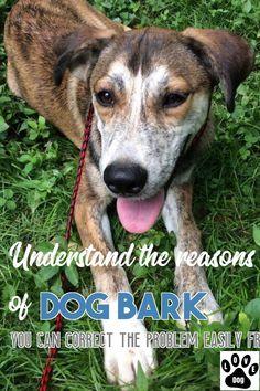 A Few Practical Tips For Dog Barking. #dogbarking Stop Dog Barking, Love Pet, Pets, Animals, Animales, Animaux, Animal, Animais, Animals And Pets
