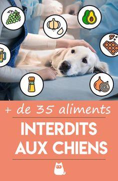 Up Dog, Dog Cat, Chien Jack Russel, Chien Shih Tzu, Frozen Dog, Dog Nails, Dog Teeth, Dry Dog Food, Bichon Frise