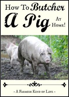 Wondering how to butcher a pig? You don& have to send your homegrown pork away for processing - you can do it right on your farm! Raising Farm Animals, Raising Chickens, Animals And Pets, Homestead Farm, Homestead Survival, Survival Skills, Survival Stuff, Survival Tips, Pig Farming