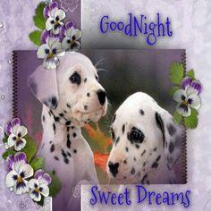 Good Night Hug, Good Morning Cat, Good Night Funny, New Good Night Images, Cute Good Morning Images, Lovely Good Night, Good Night Wishes, Good Night Sweet Dreams, Night Night