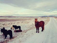 Islandzka zima