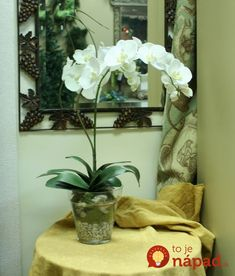Distinctive Designs Phaleanopsis Orchid with Whip Grass in Glass Flower Pot Vase Flower Color: Cream / White Hydrangea Vase, Hydrangea Not Blooming, Flower Vases, Flower Pots, Orchid Centerpieces, Orchid Arrangements, Phalaenopsis Orchid, Orchid Plants, Colorful Flowers