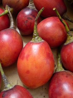 TOMATES DE ARBOL DE COLOMBIA | Fruits of Colombia. Tomato tree. Sweet and tart but retains a slight tomato flavor. Called tamarillo.
