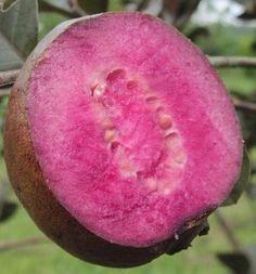 Strange Fruit, Weird Fruit, Fruit Plants, Cool Plants, Fruit Trees, Fruit And Veg, Fruits And Veggies, Vegetables, Exotic Plants