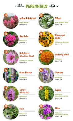 Top 30 Plants That Attract Pollinators Flower Garden Plans, Cut Flower Garden, Garden Yard Ideas, Lawn And Garden, Garden Projects, Flower Garden Design, Flowers Perennials, Planting Flowers, Shade Perennials