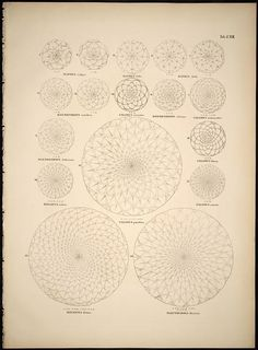 Historia naturalis palmarum. Lipsiae: T.O. Weigel, [1823-50]. biodiversitylibrary.org/page/281662