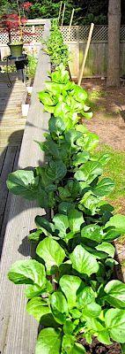 gutter garden - like this idea for a deck railing. gutter garden - like this idea for a deck railing Deck Railing Planters, Deck Railings, Gutter Garden, Herb Garden, Vegetable Garden, Outdoor Deck Decorating, Balcony Garden, Container Gardening, Garden Landscaping