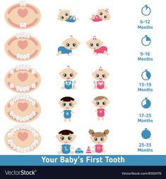 Baby teething chart Royalty Free Vector Image - VectorStock baby breastfeeding Best Picture For Baby Supplies goals For Your Taste You are looking for something, a Baby Trivia, The Babys, Baby Teething Chart, Baby Teething Remedies, Baby Constipation Remedies, Teething Symptoms, Teething Stages, Natural Teething Remedies, Baby Milestones