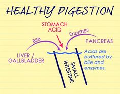 Healthy-Digestion Stomach Acids, Too Much Acid or Too Little Acid