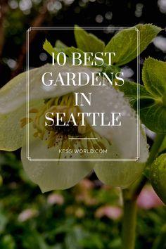 Seattle gardens: the 10 best kept local secrets - Kessi World Seattle Washington, Washington State, Stuff To Do, Things To Do, Seattle Area, Emerald City, Pacific Northwest, Amazing Gardens, Botanical Gardens