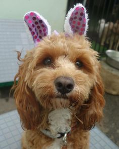 Any excuse to dress me up huh #thisismyhappyface Happy Easter! Stay safe!  Credit :: @simoneandre_makeup by zoeythecavoodle