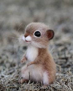 Cute Small Animals, Cute Animals Images, Cute Funny Animals, Cute Baby Animals, Felt Animals, Animals And Pets, Amazing Animal Pictures, V Instagram, Cute Eyes