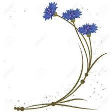 Znalezione obrazy dla zapytania cornflower watercolor