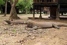 Komodo Island (Loh Liang) Komodo National Park