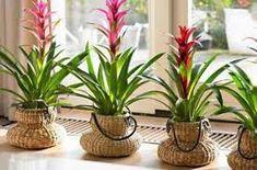 Odanız için 6 Harika Bitki - Canım Anne