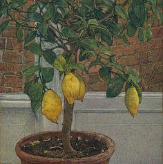 Lemon Tree - Antony Williams British, Egg tempera, 47 x 46 cm. Anthony William, Tree Illustration, National Portrait Gallery, Tempera, Art Studies, French Art, Paintings For Sale, Figurative Art, Art For Sale