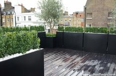 Olive trees Buxus hedge terrace planters
