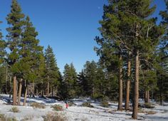 Cut Your Own Christmas Tree on Public Land