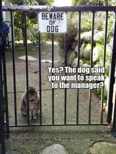 """16 Pictures Of The Funniest Animals Behind """"Beware of Dog"""" Signs. A compilation of pictures of the most hilarious animals behind beware of dog signs Funny Animal Memes, Dog Memes, Cute Funny Animals, Funny Dogs, Cute Cats, Funny Memes, Animal Quotes, Funny Kitties, Adorable Dogs"""