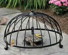 Ground type bird feeder within a wire basket-shell that hosts an alternate feeding environment and provides safe escape from predators..