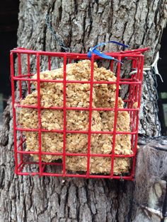 Come & Get It! - homemade cold-weather food for the birds.