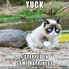 =^..^= Grumpy Cat!