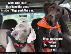 What dogs hear - Zooey knows go and playgroup.  Need to be careful what you say around dogs, you never know!
