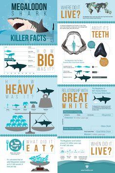 Megalodon Infographic Poster (Matte) For Sale - Academic Poster, Research Poster, Information Poster, Information Graphics, Information Design, Design Typography, Infographic Templates, Infographic Posters, Infographics Design