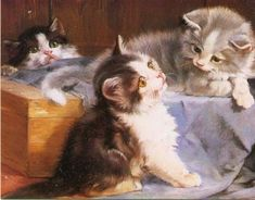 Julius Adam, Three Kittens