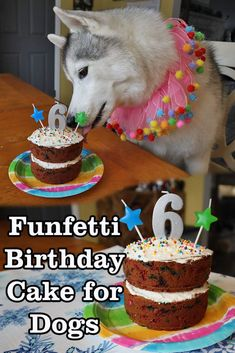 Celebrate your pup with a homemade dog cake for her birthday! This easy cake recipe is perfect for dogs with peanut butter and applesauce and whipped cream frosting. Your pup will love it! Easy Dog Cake Recipe, Dog Cake Recipes, Dog Treat Recipes, Dog Food Recipes, Recipe Treats, Frozen Dog Treats, Diy Dog Treats, Healthy Dog Treats, Homemade Dog Cookies