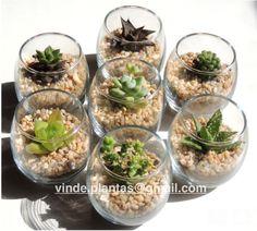 Composizione Piante Grasse In Vaso Di Vetro.Composizione Di Piante Grasse In Vetro Basta Poco Quattro Piantine