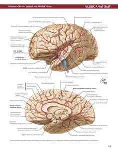 Netter Neuro Atlas