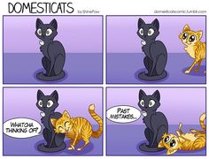 Past Mistakes (Me as a cat)