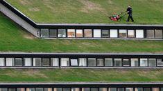 San Francisco, California - living roof  6 Hyper Exotic Urban Gardens