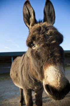 Island Farm donkey sanctuary make for a rather lovely day out - just ten minutes drive from The Old Post Office, Wallingford